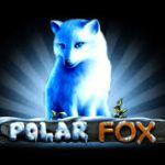 """Новости игрового автомата """"Polar Fox"""" от клуба Вулкан"""